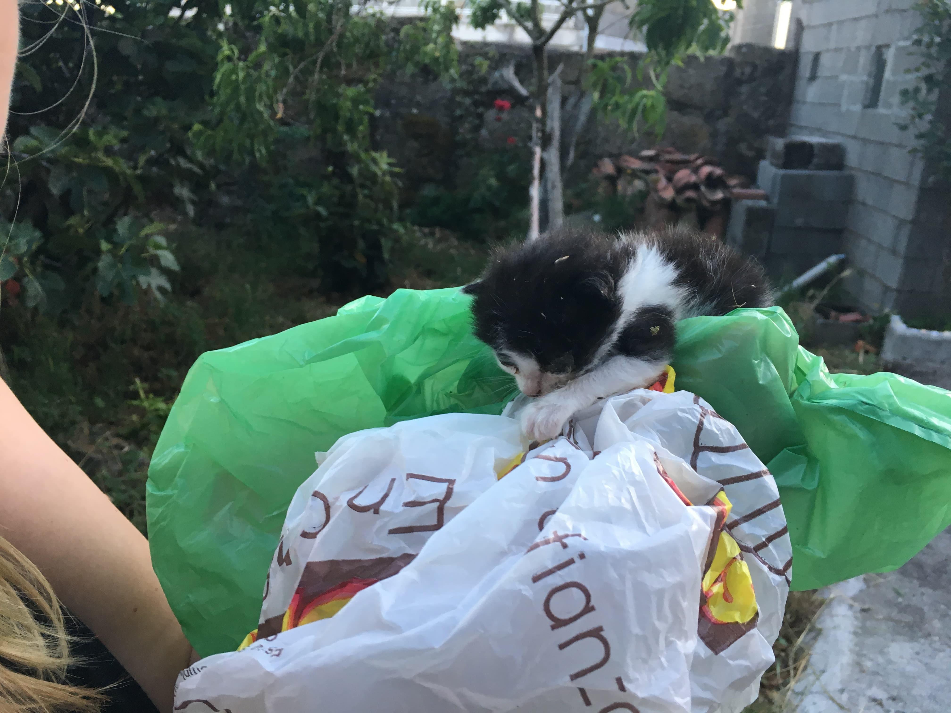 Yoda - unser Katzenbaby