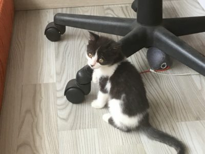 Yoda -unser Katzenbaby