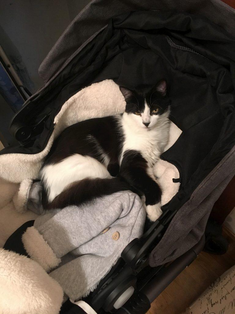 Yoda - unsere schwarz-weiße Katze