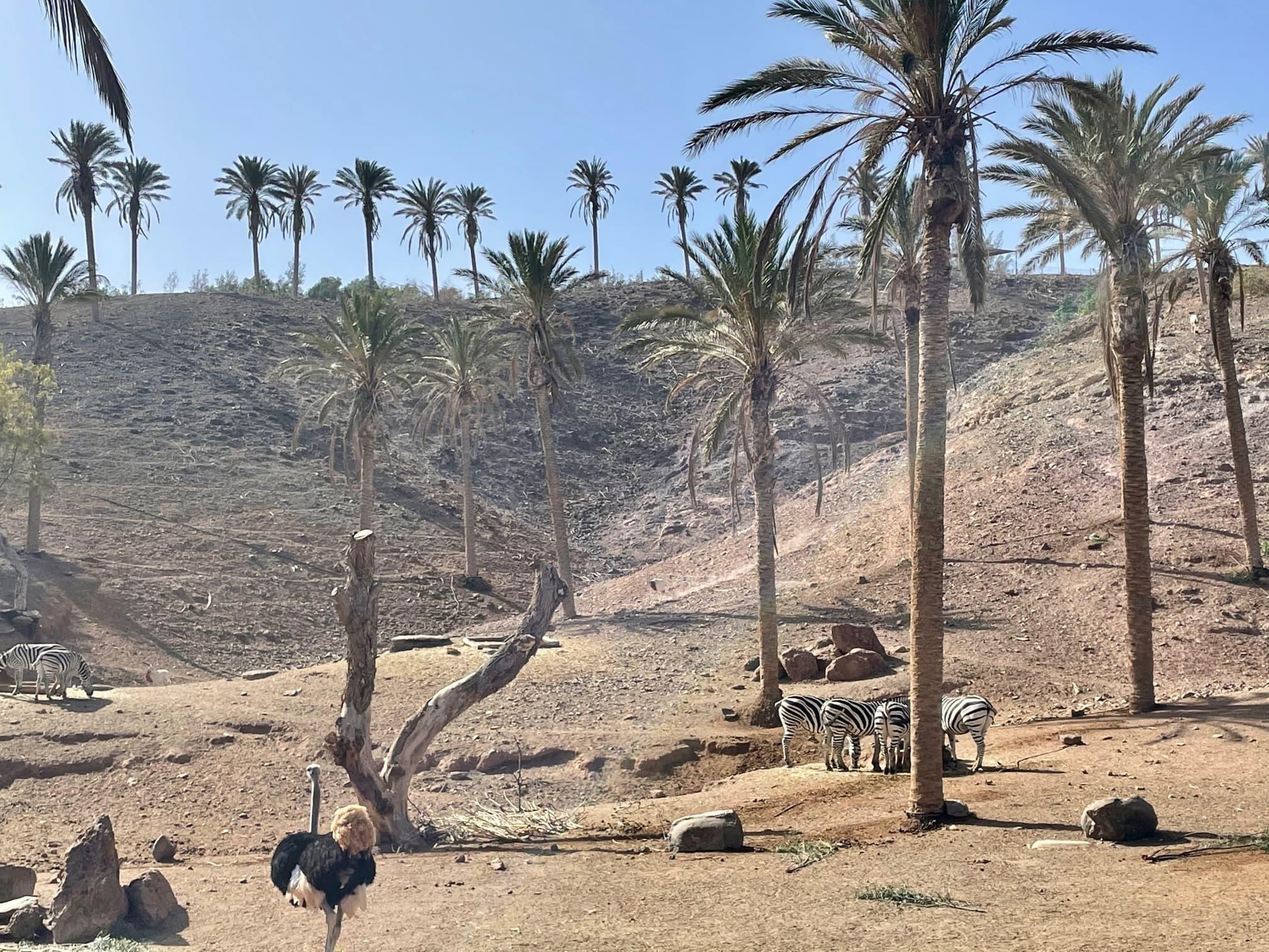 Urlaub auf Fuerteventura mit Kindern - Oasis Park Fuerteventura